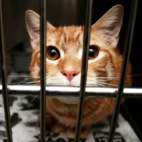 Shelter-Cat